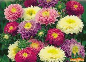 Открытка самые красивые цветы для тебя