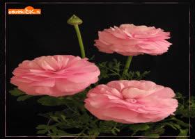 Открытка самые красивые цветы