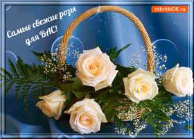 Открытка самые свежие розы для вас