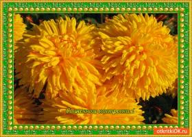 Открытка солнечного и цветущего настроения