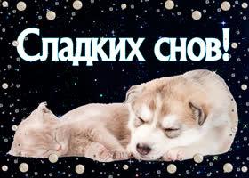 Открытка спи спокойно, желаю тебе сладких снов