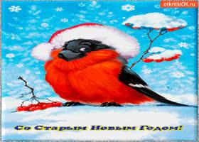 Картинка старый новый год открытка тебе