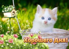Открытка супер картинка хорошего дня с котенком