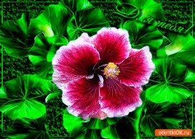 Картинка тебе этот цветок