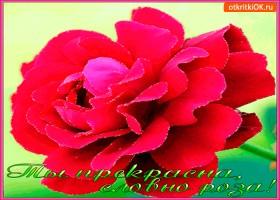 Картинка ты прекрасна словно красная роза