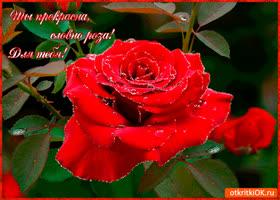 Открытка ты прекрасна словно роза