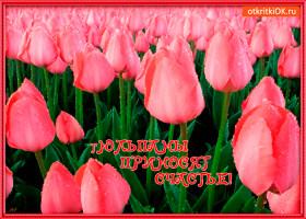 Картинка тюльпаны приносят счастье