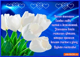 Открытка тюльпаны символ любви