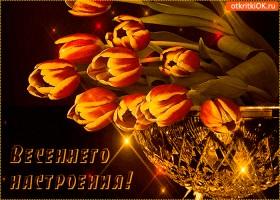 Открытка тюльпанового настроения