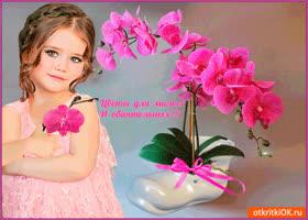 Открытка цветы для милых и обаятельных людей