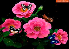 Картинка цветы и бабочки тебе