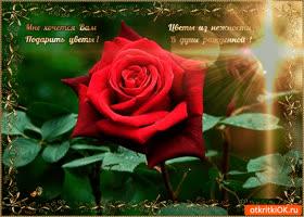 Открытка цветы из нежности