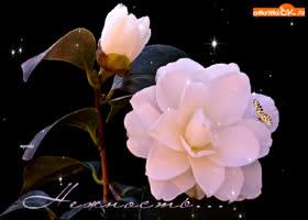 Картинка цветы нежность открытка