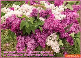 Картинка цветы пускай цветут всегда