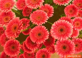 Картинка цветочного настроения