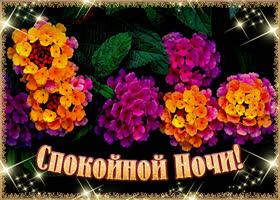 Открытка цветущая картинка спокойной ночи