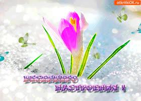 Картинка цветущего весеннего настроения