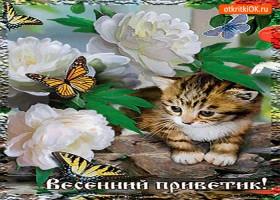Картинка цветущий весенний приветик