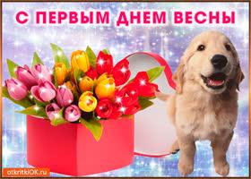 Картинка тюльпаны первый день весны