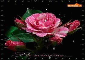 Картинка цветы нежность фото