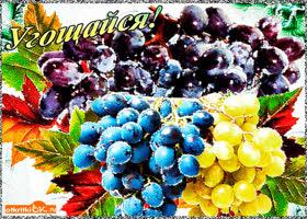 Картинка угощайся виноградом