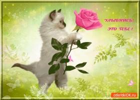 Картинка улыбнись эта роза тебе