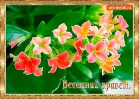 Картинка весенний цветной приветик