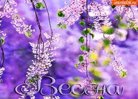 Картинка весна цветущая