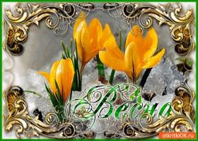 Открытка весна уже расцветает