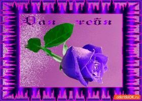 Открытка вот эта роза для тебя