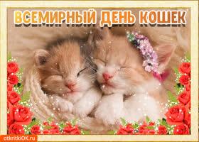 Открытка всемирный день кошек 8 августа