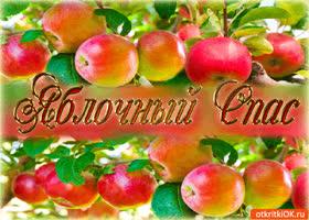 Картинка яблочный спас - свежие яблоки для вас!