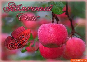 Картинка яблочный спас - вкусных яблок нам припас!
