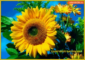 Картинка желаю вам солнечного вам настроения