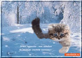 Открытка зима пушиста как котёнок